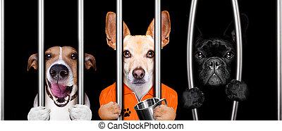 detrás barras, perros, prisión, cárcel