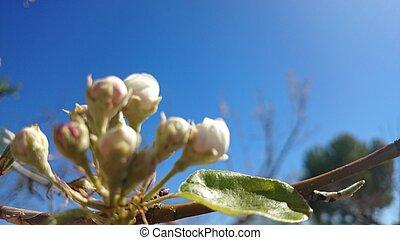 Cielo azul con una peque?a flor en primer plano
