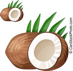 dettagliato, cooking., ingredienti, cibo, coconut., bevanda, isolato, fondo., vettore, serie, bianco, icona