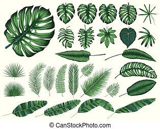 dettagliato, elementi, foglie, isolato, collezione, tropicale, vettore, piante