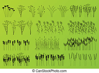 dettagliato, piante, silhouette, erba, fiori