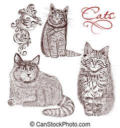 dettagliato, vettore, collezione, mano, gatti, disegnato