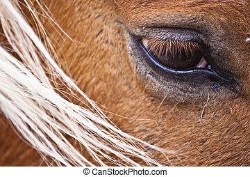 dettaglio, di, cavallo, occhio