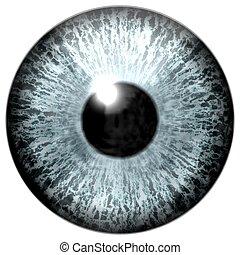 dettaglio, di, occhio, con, grigio, colorato, iride, e, nero, pupilla
