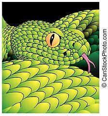 dettaglio, di, serpente verde