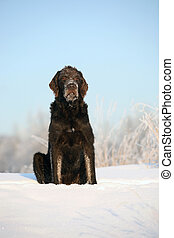 The brown dog sits on snow against the sky