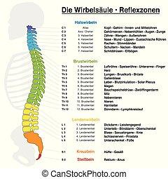 deutsch, reflexology, rückgrat, tabelle, namen