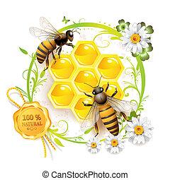 deux, abeilles, et, rayons miel
