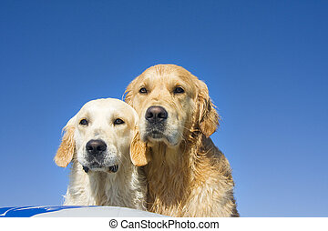 deux, bateau, chiens