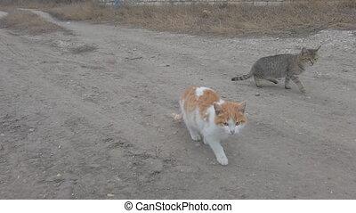 deux, chatons, appareil photo, sdf, affamé, devant