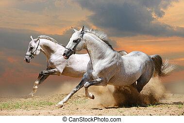 deux, chevaux, dans, coucher soleil