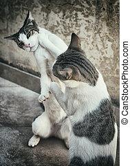 deux, combat, ou, chats, rue., jouer