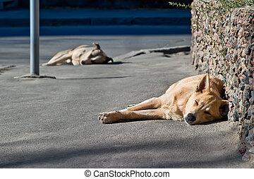 deux, dormir, sdf, chiens