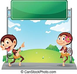 deux, espiègle, vert, planche, devant, singes, vide
