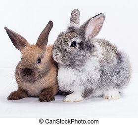deux, lapins