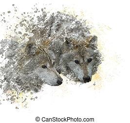deux, loups, aquarelle
