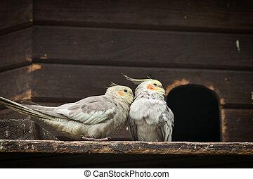 deux oiseaux, dans, conversation