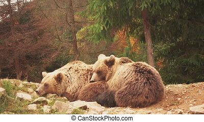 deux, ours, jouer ensemble, agréable, jeune