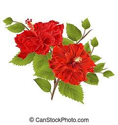 exotique hibiscus fleur rouges hibiscus fleur simple. Black Bedroom Furniture Sets. Home Design Ideas
