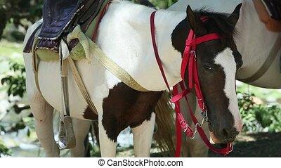 deux, sellé, brun, chevaux, reposer, blanc, conjugal, ...