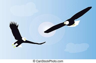 deux, tailed blanc, aigles, are, combat, dans, mi air,...