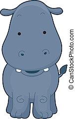 devant, hippopotame, vue