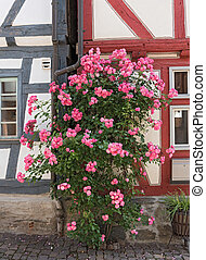 devant, maison, buisson, rose, demi-timbered