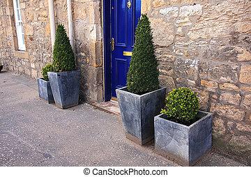 devant, plante maison, décor
