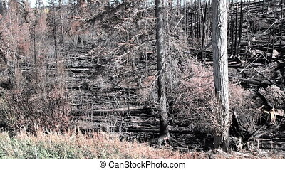 Devastation of Landscape - pan of devastation from british...