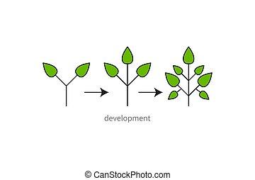 Development, growth, evolution icon