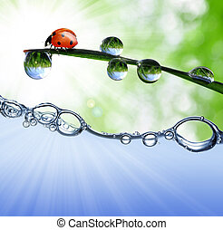 dew and ladybug - Fresh grass with dew drops and ladybug ...