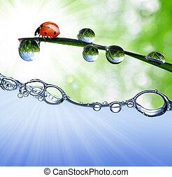 dew and ladybug - Fresh grass with dew drops and ladybug...