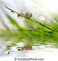 dew and snail - Snail on dewy grass