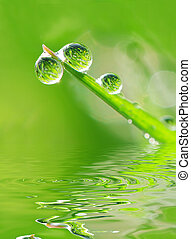 Dew and water - Drops ow dew falling in the water creating...