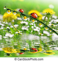 dew drops with ladybugs
