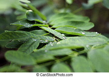 Dew on the leaves. Drop laying over