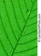 Dew - Water droplets dew on  green leaf surface