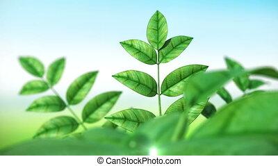 Dewdrop on leaf Beautiful animation