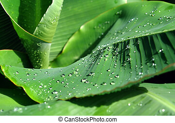 Dewdrops on green leaves