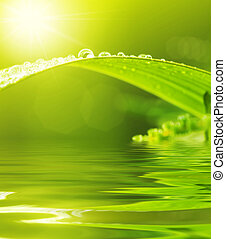 dews, på, grønnes blad