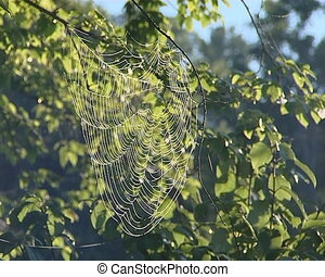 Dewy cobweb hanging on branches. - Dewy cobweb hanging on...