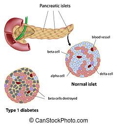 diabète, pancréatique, îlot, eps8