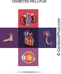 Diabetes mellitus affected organs - Diabetes mellitus...