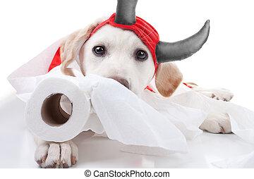 diablo, halloween, perro