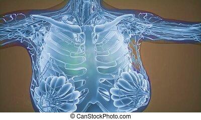 diagnostic, poitrine, radio, mammogram, imaging, cancer