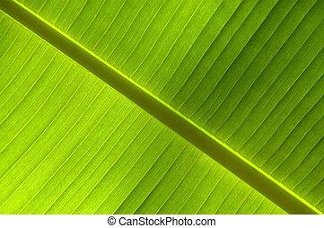 Diagonal Background of a Leaf