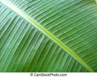 diagonal banana leaf texure