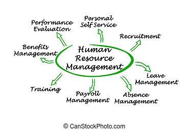 diagram, administration, resurs, mänsklig