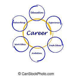 diagram, av, karriär, framgång
