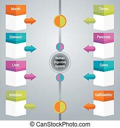 diagram, emésztő rendszer, ikon